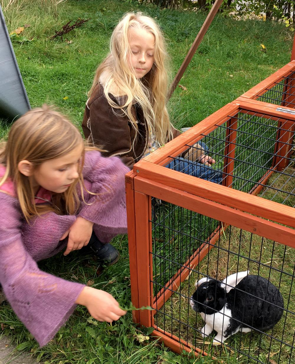 storm og silke fodrer kaniner