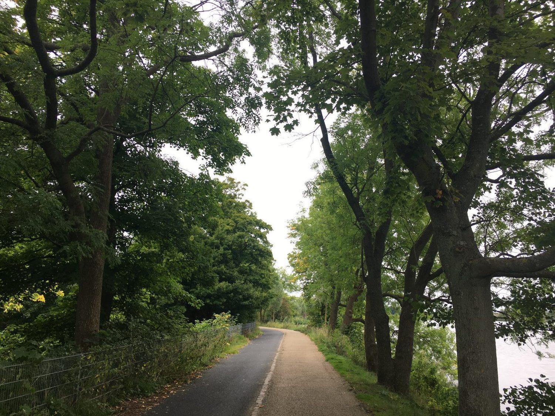 en sti omgivet af træer, vejen videre