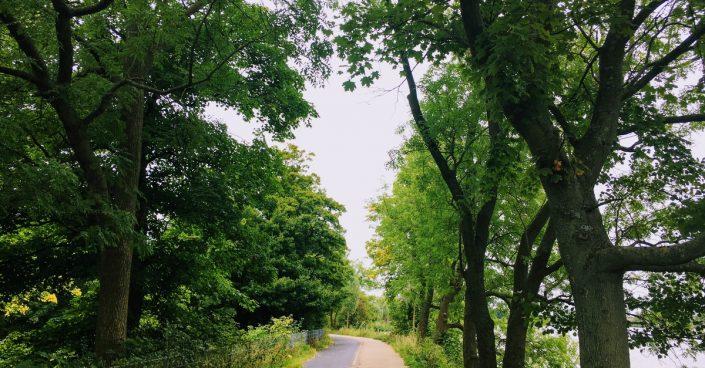 Vejen videre mellem træerne
