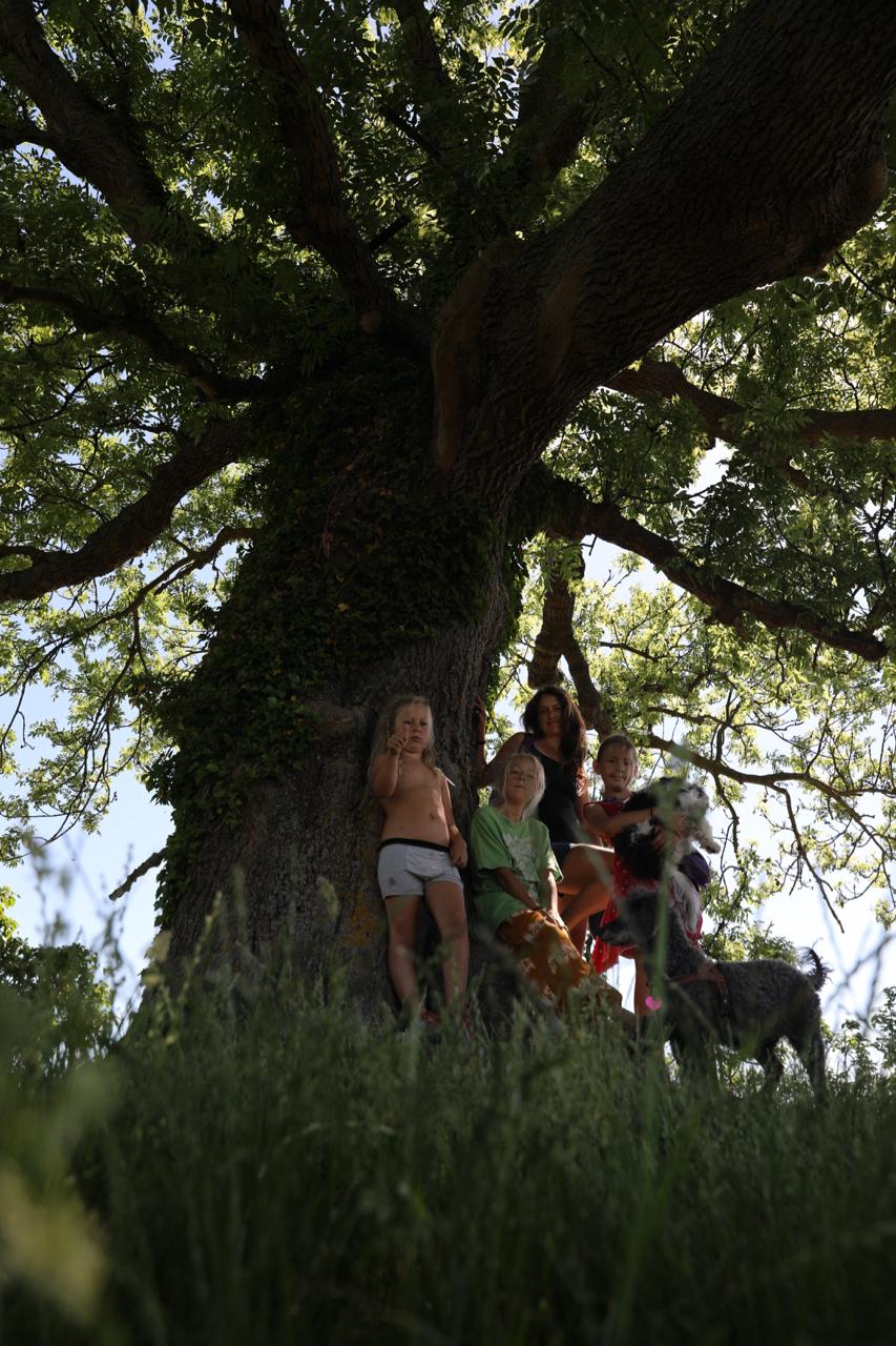 Det gamle træ