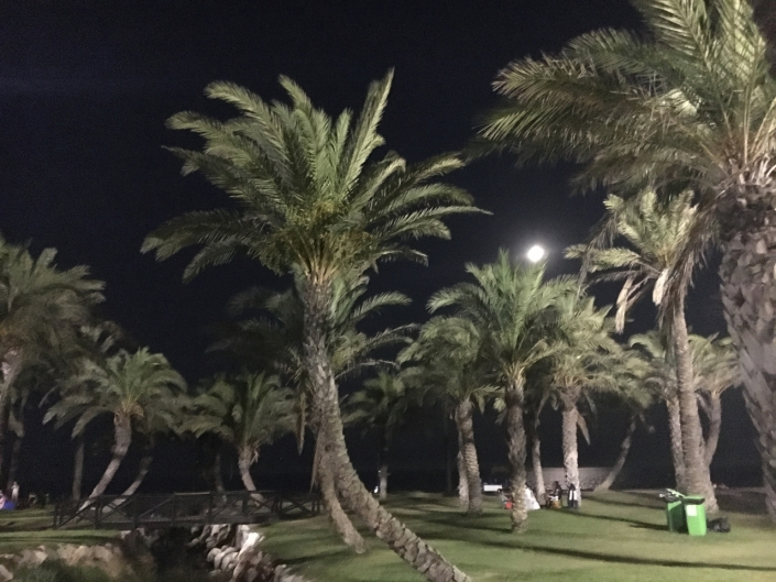 The moon rising over the palm trees at the beach