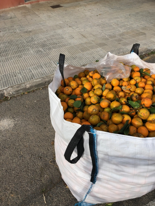 Oranges picket from roadside trees. This is still an exotic thing for us, and we wonder, if these fruits are even consumed?