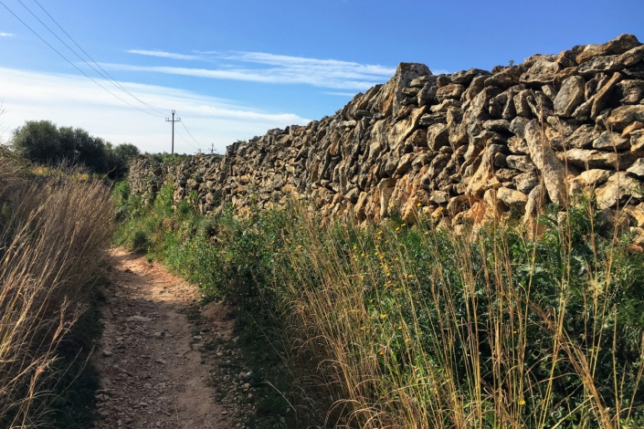 The drywall separating the camino from the fields is amazing when you think about it. It is made without cement, and God knows how long it has been here. Who can even build this kind of wall anymore?